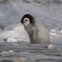 Penguin Bloopers